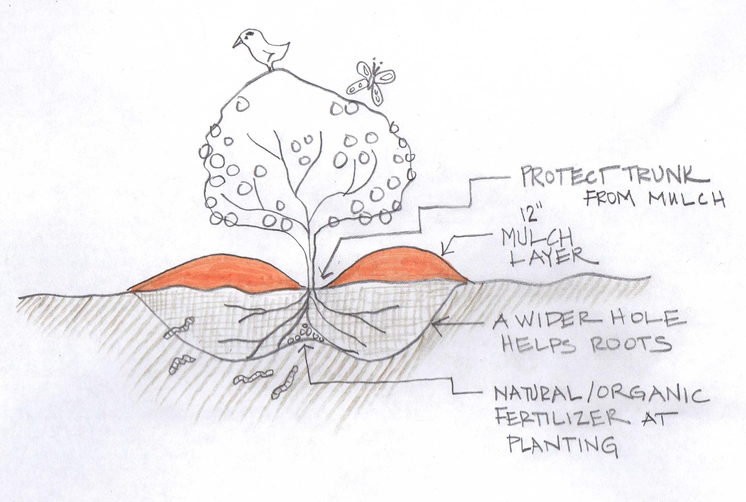 image: Soil Erosion Solutions for street trees