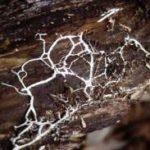 image: writing portfolio Mycelium Demonstrating Taoism